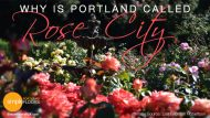 Portland – Why It's The Rose City